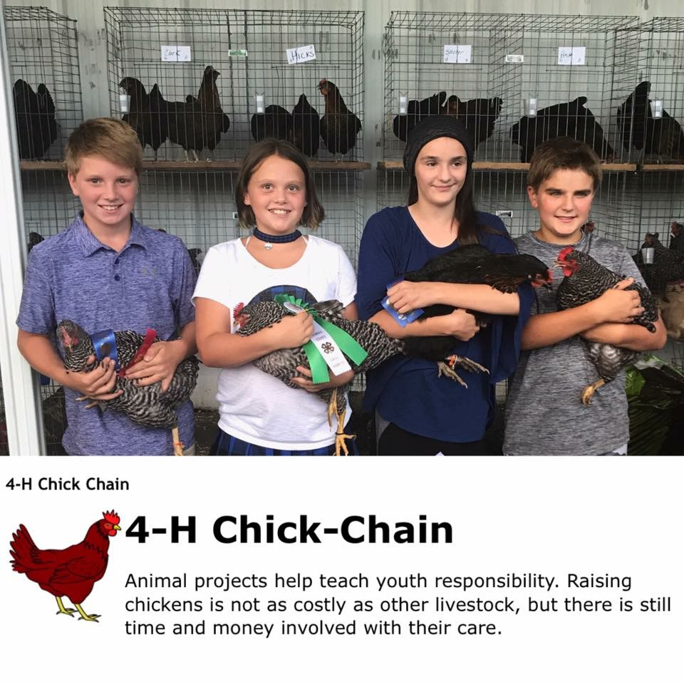 The Chicken Chain Kids